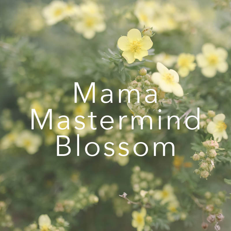 Mama Mastermind