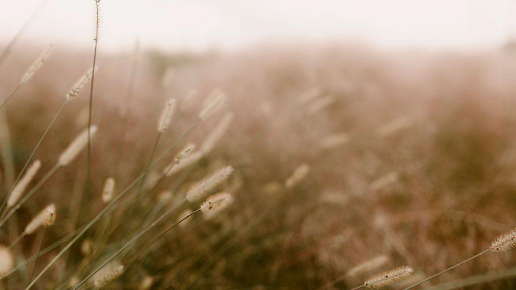 Calm Meditative Grass View